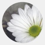 La flor de las margaritas de la margarita blanca etiquetas redondas