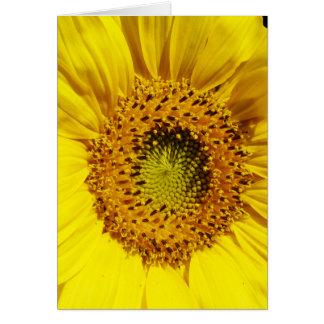La flor de un Sun Tarjeta De Felicitación