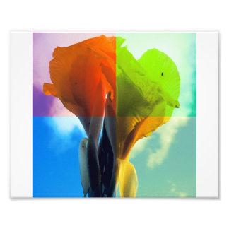 La flor del arte pop en diverso color quads mirada fotografía