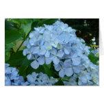 La flor del Hydrangea carda el jardín azul de los  Tarjetas