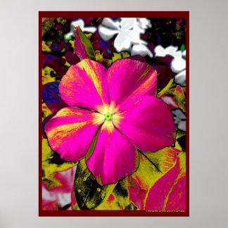 La flor del Phlox de las rosas fuertes florece dis Póster