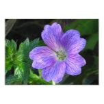 la flor invita a la prueba comunicados