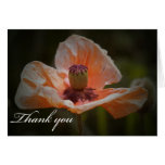 La flor le agradece cardar felicitación