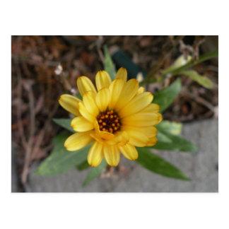 La flor pasada de la postal del verano