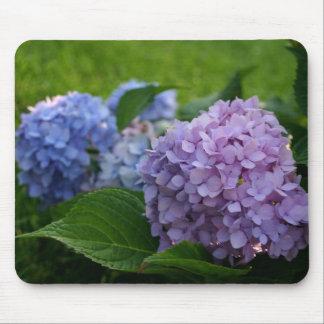 La flor púrpura y azul del Hydrangea florece flora Tapetes De Raton