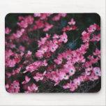 La flor rosada del árbol de Dogwood Tapetes De Ratones