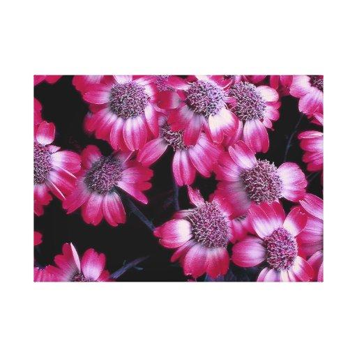 La flor rosada en verano estiró la impresión de la impresion de lienzo