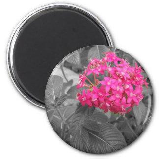 La flor rosada imán redondo 5 cm
