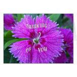 La flor rosada que piensa en usted carda tarjeta