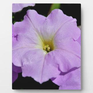 La flor salvaje púrpura de Saratoga mediados de ag Placas De Madera