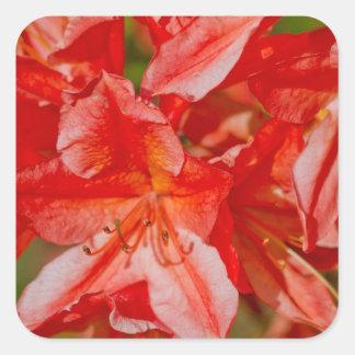 La flor salvaje roja pegatina cuadrada