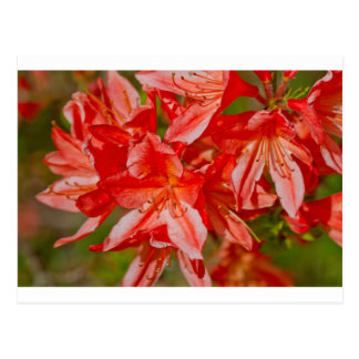 La flor salvaje roja postal