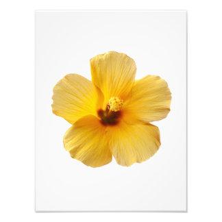 La flor tropical del hibisco amarillo florece fotografias