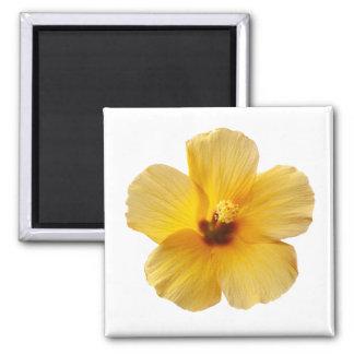 La flor tropical del hibisco amarillo florece imán cuadrado