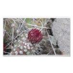 La flora de Ishawooa Wyoming planta la botánica Fotografías