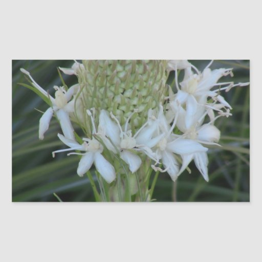 La flora de Kooskooskia Idaho florece el Pegatina Rectangular