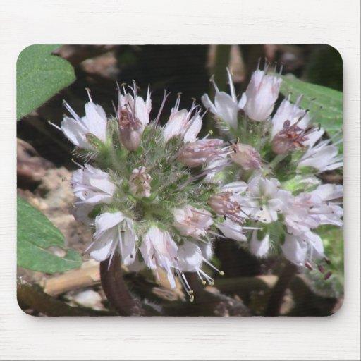 La flora de Kooskooskia Idaho florece el Wildflowe Alfombrilla De Ratones