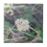 La flora de Slough de la presa del castor florece  Azulejos Ceramicos