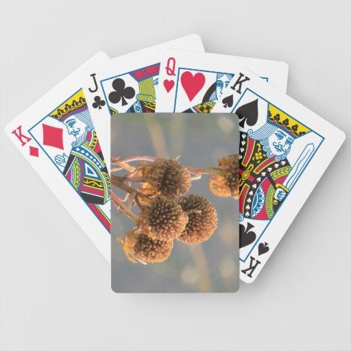 La flora de Slough de la presa del castor florece  Barajas De Cartas