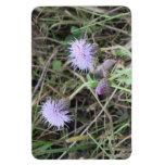 La flora de Slough de la presa del castor florece  Imanes Rectangulares