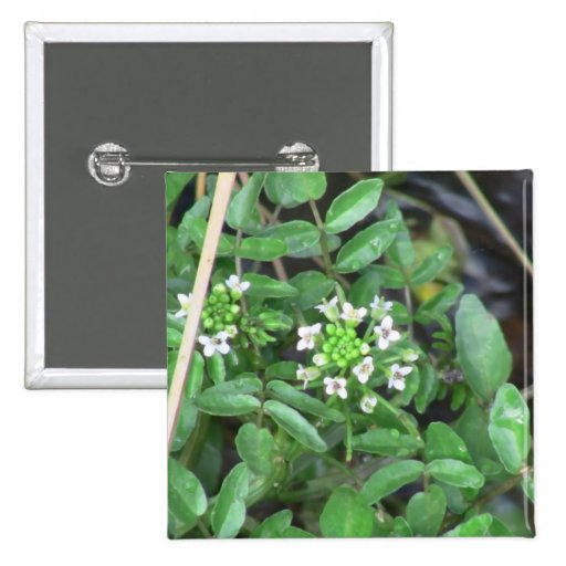 La flora de Slough de la presa del castor florece  Pin Cuadrada 5 Cm