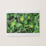 La flora de Slough de la presa del castor florece  Rompecabeza