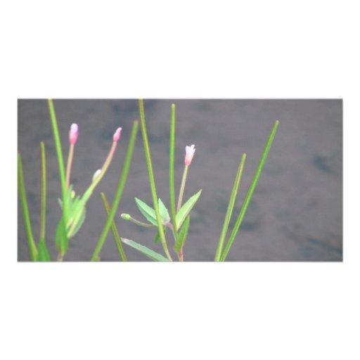 La flora de Slough de la presa del castor florece  Tarjeta Fotografica