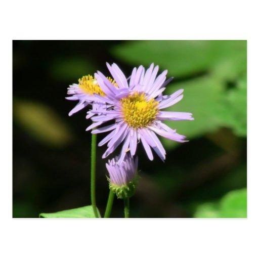 La flora de Slough de la presa del castor florece  Tarjeta Postal