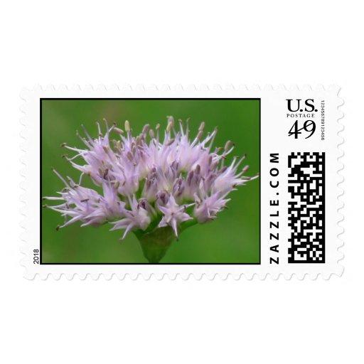 La flora de Umatilla Oregon florece la botánica de