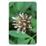 La flora de Umatilla Oregon florece la botánica de Imanes De Vinilo