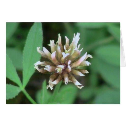 La flora de Umatilla Oregon florece la botánica de Tarjeta De Felicitación