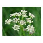 La flora de Umatilla Oregon florece la botánica de Tarjetas Postales