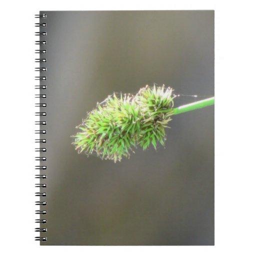 La flora negra del barranco de Ochoco planta biota Libro De Apuntes