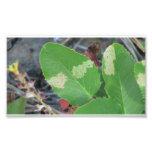 La flora negra del barranco de Ochoco planta biota Arte Fotografico