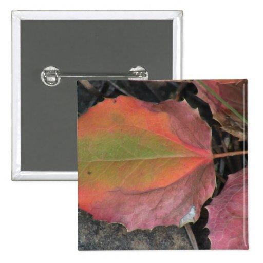 La flora negra del barranco de Ochoco planta biota Pin