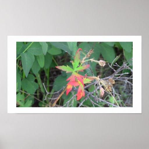 La flora negra del barranco de Ochoco planta biota Póster
