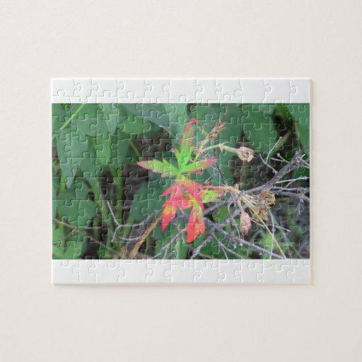 La flora negra del barranco de Ochoco planta biota Puzzles Con Fotos