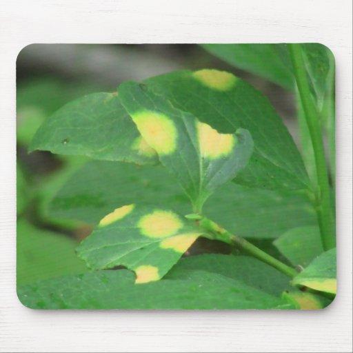 La flora negra del barranco de Ochoco planta biota Alfombrillas De Ratones