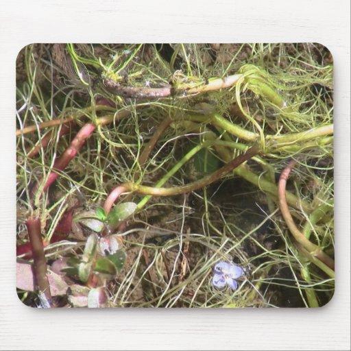 La flora negra del barranco de Ochoco planta biota Tapetes De Raton