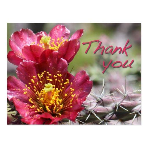 """La floración de Cholla """"le agradece"""" postal"""