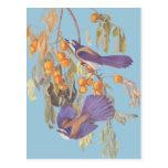 La Florida azul friega los pájaros de Jay Audubon Postales