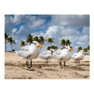 La Florida - cuatro golondrinas de mar en una Tarjeta Postal
