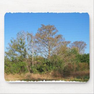 La Florida Cypress calvo en un rancho cenagoso Tapetes De Ratones