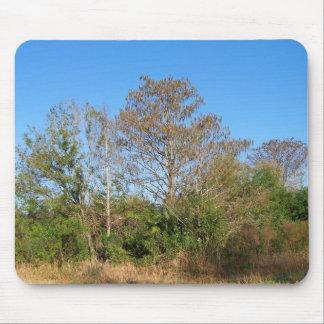 La Florida Cypress calvo en un rancho cenagoso Alfombrillas De Raton
