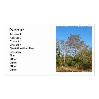 La Florida Cypress calvo en un rancho cenagoso Tarjetas De Visita