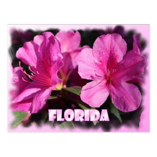 La Florida florece postal