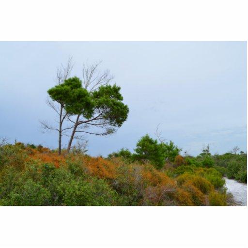 La Florida friega árboles de la tierra Esculturas Fotograficas