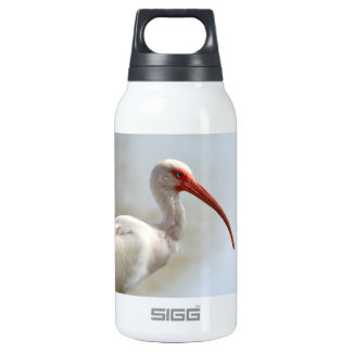 La Florida Ibis - pájaro de agua fresca
