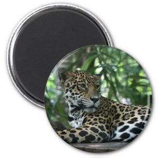 La Florida Jaguar que mira detrás que se acuesta Imán Redondo 5 Cm