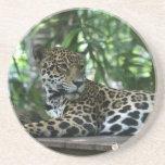 La Florida Jaguar que mira detrás que se acuesta Posavaso Para Bebida